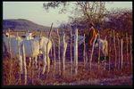 Brazil Slide Series: Collection A Heranca Cultural De Minas Gerais, Slide No. 0011. by Herbert Knup and Jon M. Tolman