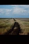 Harding Solano Abandoned Section Road