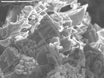 Unusual calcite crystals