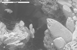 Filaments bridging dolomite crystals
