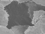 Manganese plates with short filaments off edges