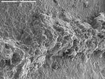 Overview of yellow vein in basalt