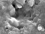 Close up of crust surface by M. Spilde, D. Northup, and L. Melim