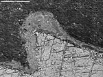 Backscatter closer view of Mg coating on calcite by M. Spilde, L. Melim, and D. Northup