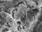 Detail of flaky area with Mg crust by M. Spilde, L. Melim, and D. Northup