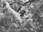 Detail of right crystal point with crust from tp1-60.tif by M. Spilde, L. Melim, and D. Northup