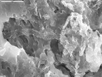 A single reticulated filament pressed upon substrate by D. Northup, M. Splide, L. Melim, R. Liescheidt, and A. Kooser