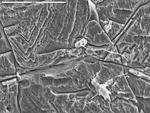 Wide overview of very long filament and film bridging cracks in crystals by D. Northup, M. Spilde, and L. Melim