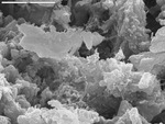 Another area of microrods and platy calcite