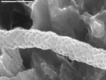 View of texture of reticulated filament by M. Spilde