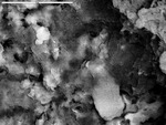 Back scatter of clay and calcite mixture by D. Northup, M. Spilde, L. Melim, and R. Liescheidt