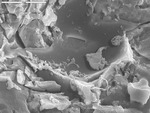 Detail on possible biofilm by M. Spilde, D. Northup, and L. Melim