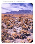 Caption: Desert flowers brighten the view in southern New Mexico.