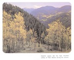 Caption: Colorful aspens dot the high mountain valleys of New Mexico during the autumn.