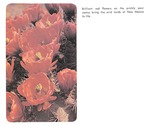 Caption: Brilliant red flowers on the prickly pear cactus bring the arid lands of New Mexico to life.