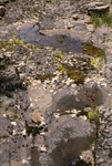 Little Water Canyon (36).JPG