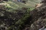 Picket Post Mountain   (4).tif