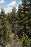Wildcat Canyon   (3).tif