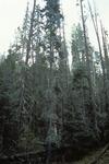 Thomas Creek   (7).tif