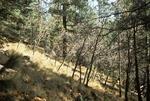 Thomas Creek   (5).tif