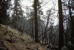 Thomas Creek   (4).tif