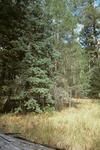 Thomas Creek   (10).tif