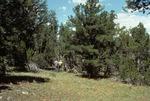 Wildcat Canyon   (8).tif