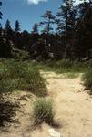 Wildcat Canyon   (7).tif
