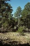 Wildcat Canyon   (5).tif