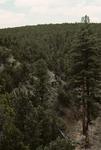 Wildcat Canyon   (2).tif