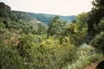 Upper Fork Parker Creek   (8).tif