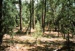 Upper Fork Parker Creek   (7).tif