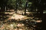 Upper Fork Parker Creek   (6).tif