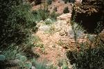 Upper Fork Parker Creek   (4).tif