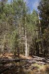 Thomas Creek   (9).tif