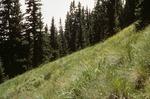 McCrystal Meadows   (6).tif