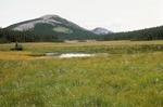 McCrystal Meadows   (4).tif
