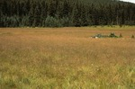 McCrystal Meadows   (3).tif