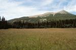 McCrystal Meadows   (2).tif