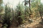 Little Water Canyon   (6).tif