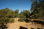 Largo Mesa   (3).tif