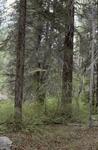 Zuni Mountains (1).JPG