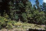 Haynes Canyon   (7).tif