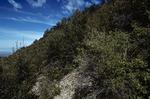 Haynes Canyon   (6).tif