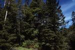 Haynes Canyon   (4).tif
