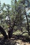 Wildcat Canyon (2).JPG