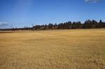 Garland Prairie  (5).tif