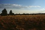 Garland Prairie  (4).tif