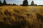 Garland Prairie  (2).tif