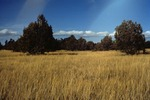 Garland Prairie  (1).tif